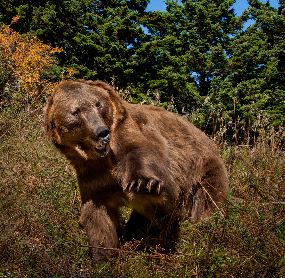 top 10 grizzly bear moments discovery kids
