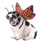 MonbarkButterfly