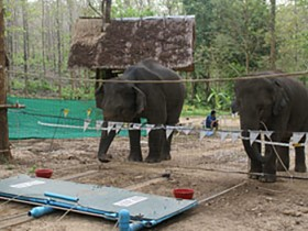 New_Elephants_Intelligence