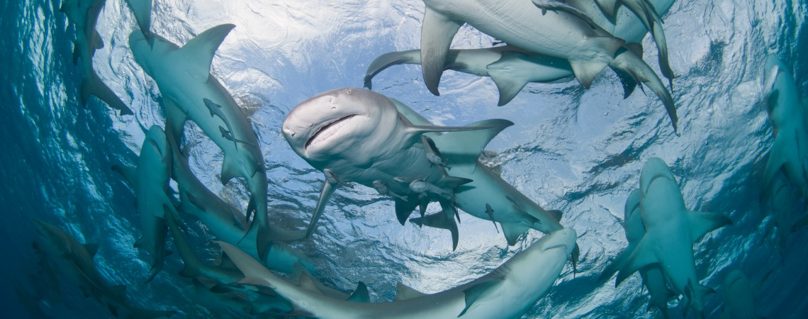 Are Sharks Getting A Bad Rap?