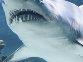 SHARKfeat