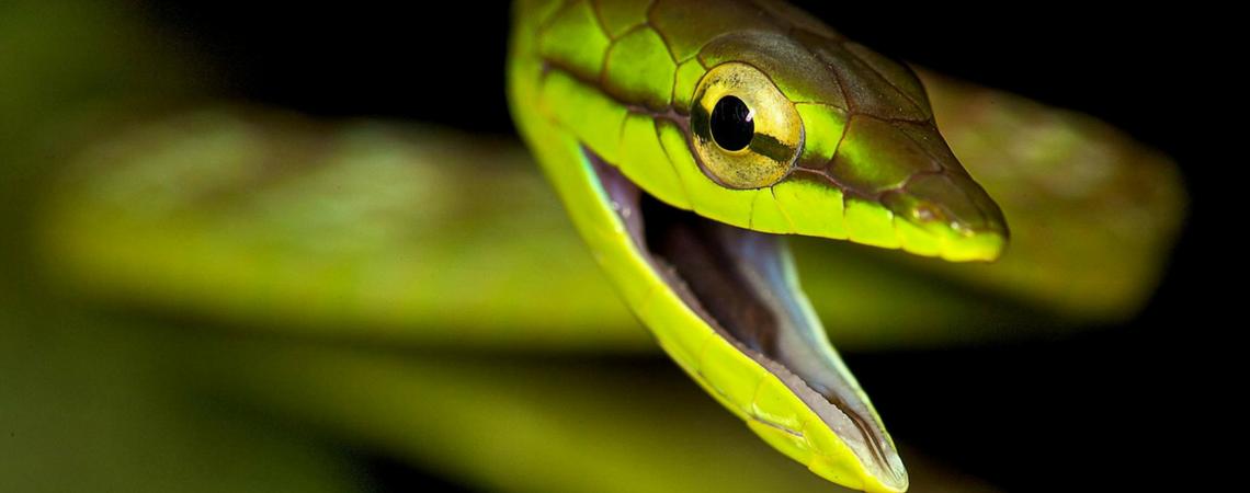 Snake 1140x450