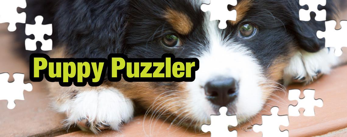 jigsaw_puppy