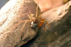 spider-gift-670