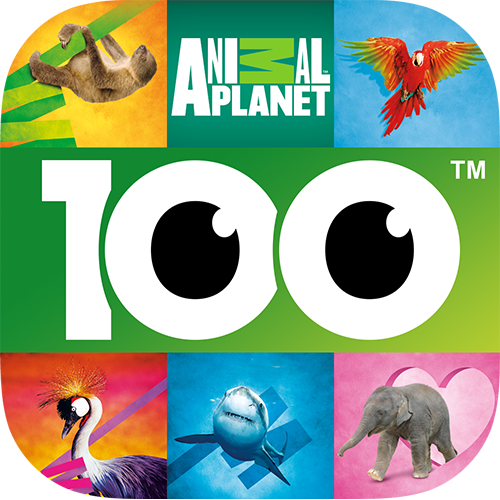 Animal Planet Guess the Animals Quiz