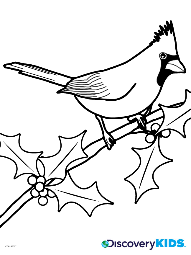 Christmas Coloring Pages: Winter Birds | Animal Jr.