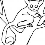DK-BushBaby-Coloring