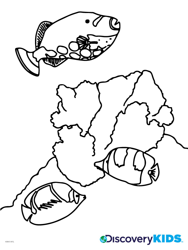 Marine Life Coloring Page