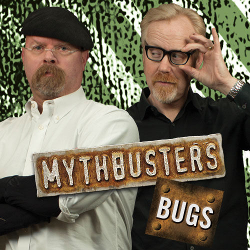 Mythbusters_Quizzes_BUGS