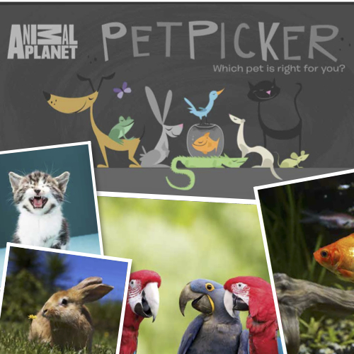 Pet Picker