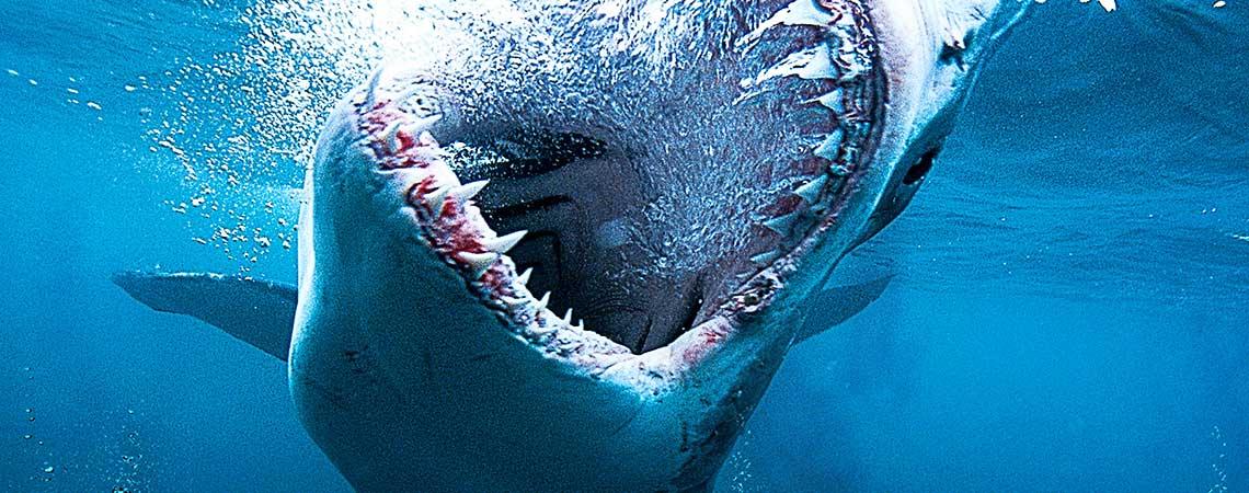 Shark_1140x450