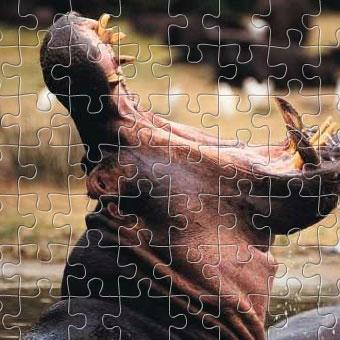 Wildlife Puzzles