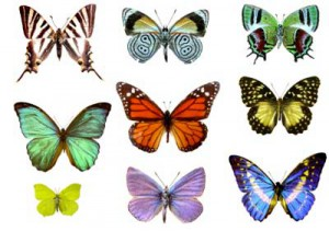 Article Where Do Butterflies Get Their Colors Print