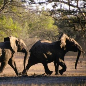 elephants-afraid-mice-300