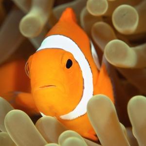 fish-breathing-underwater-300