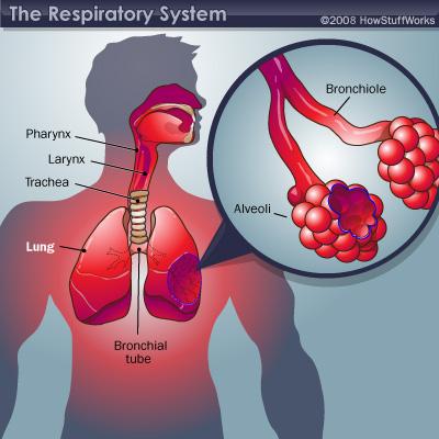 respiratory_large