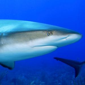 survive-shark-attack-300