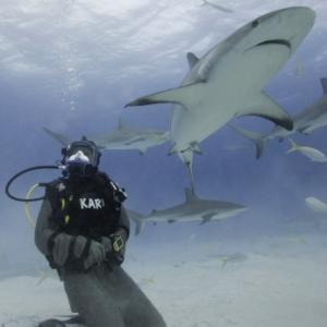 survive-shark-attack