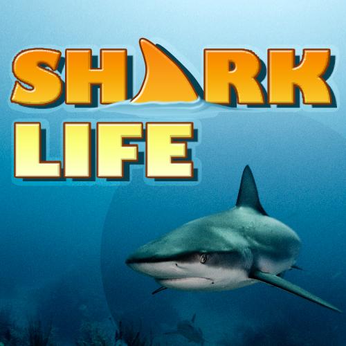 sharks discovery kids shark life